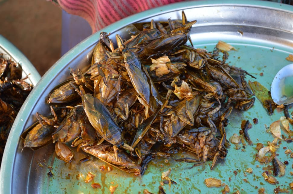 Eat Some Bugs! in Cambodia - Best Time