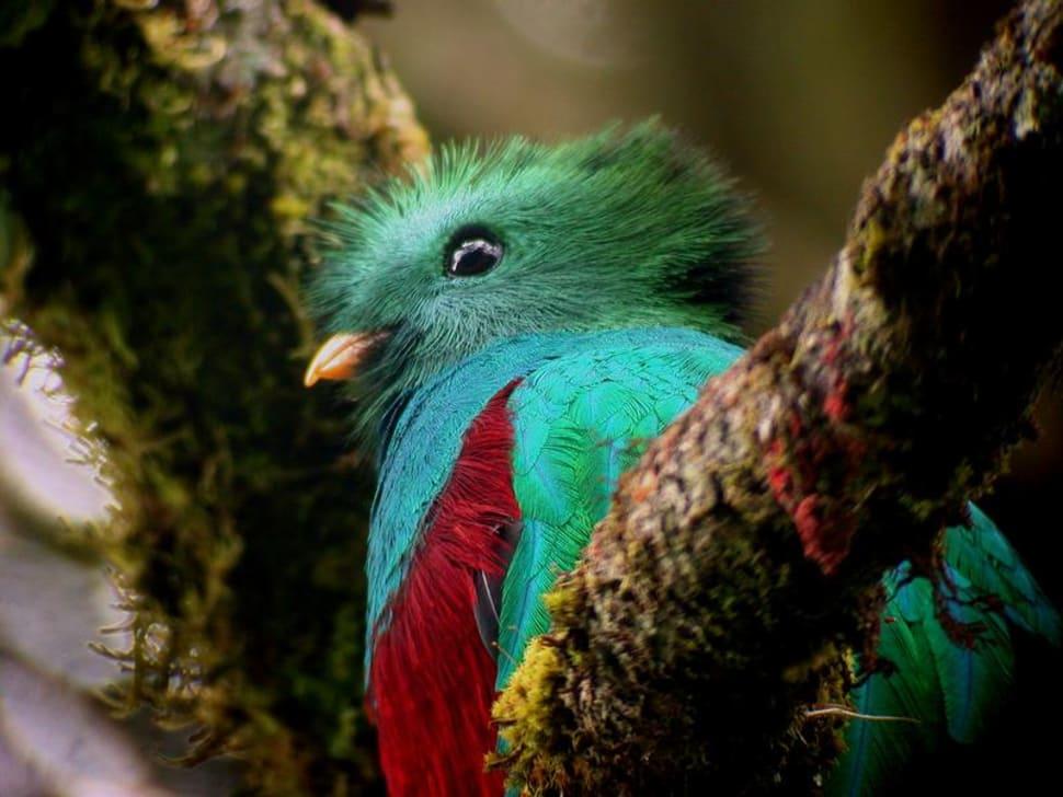 Birdwatching in Guatemala - Best Time