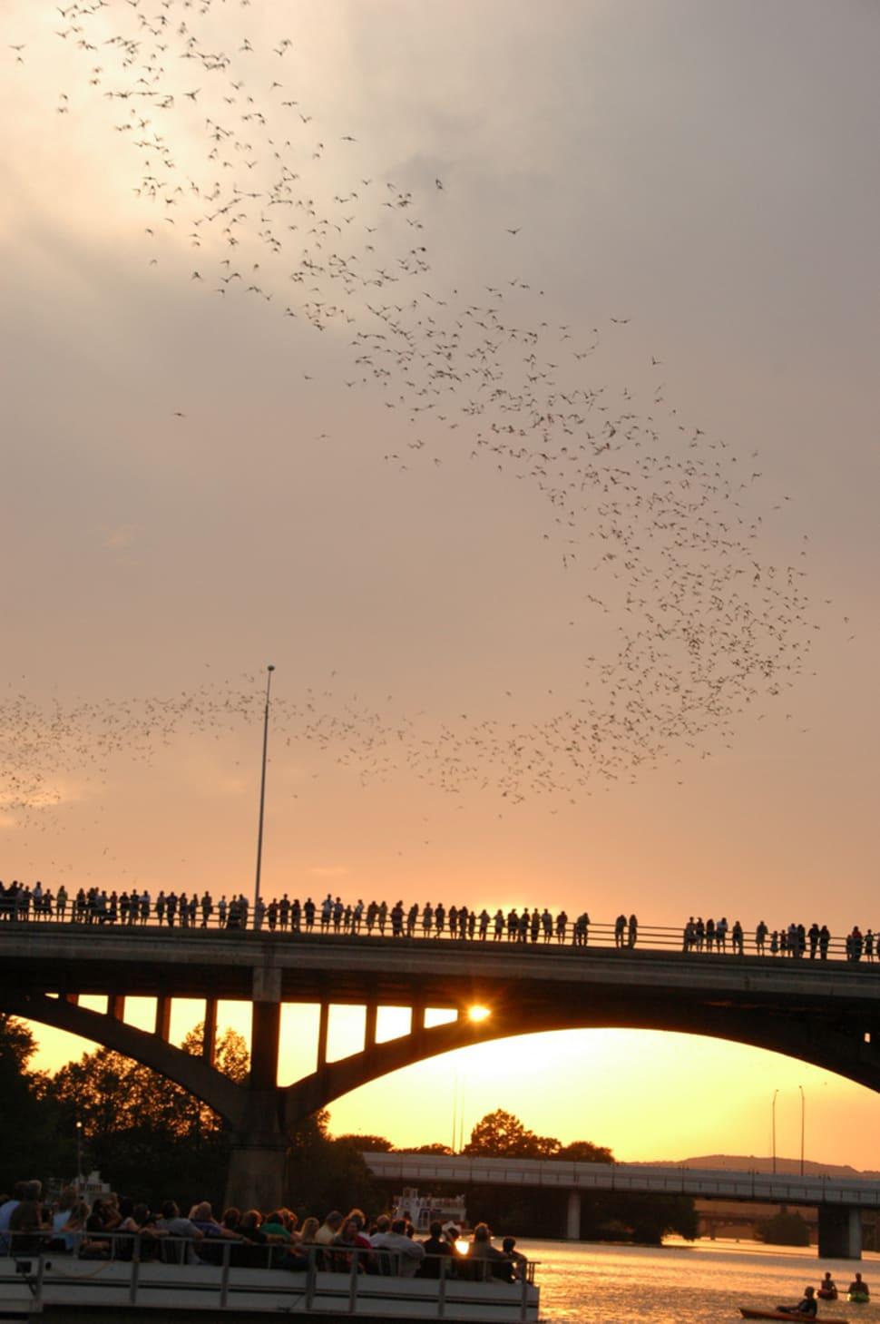 Bats leaving the Congress St. Bridge, Austin