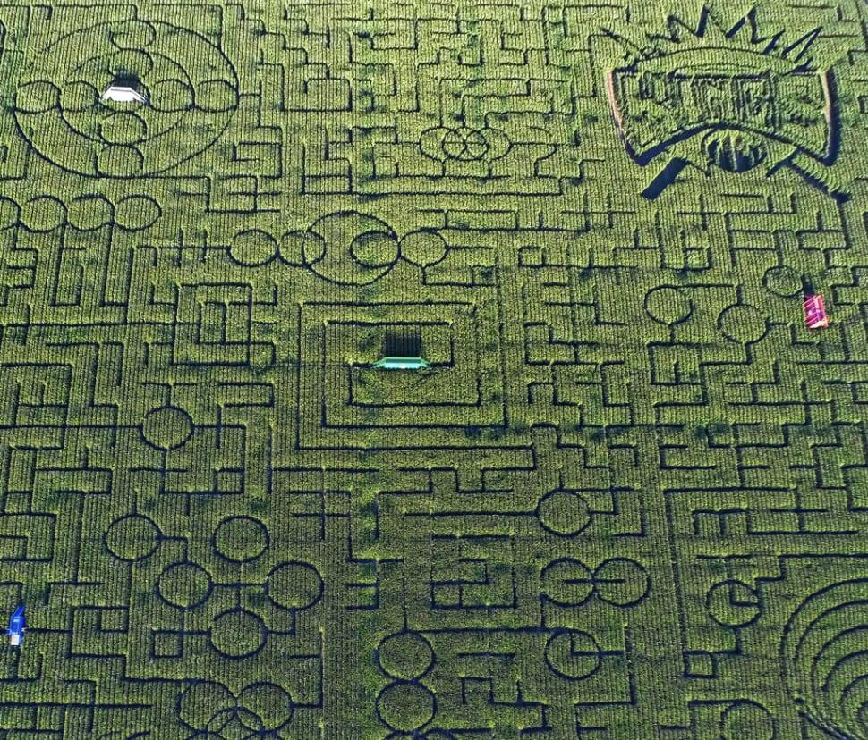 Cool Patch Pumpkins Corn Maze in California - Best Time