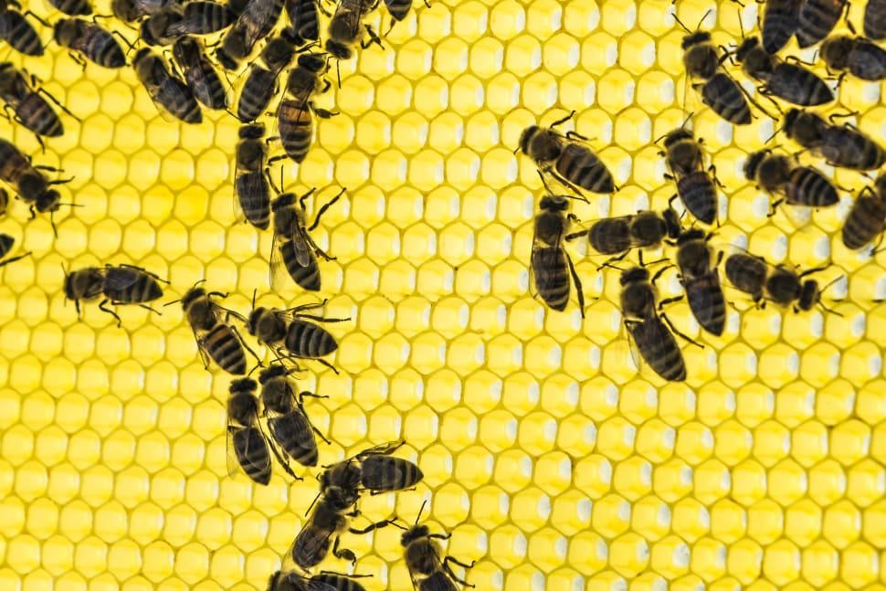 Honey Season in Crete - Best Time