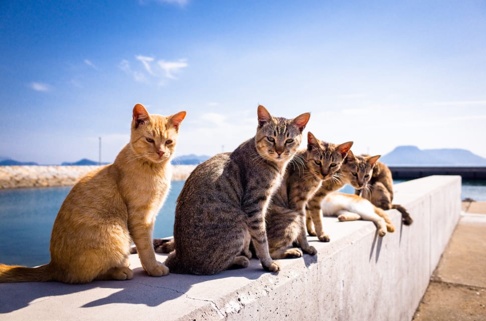 Aoshima (Cat Island) in Japan - Best Season