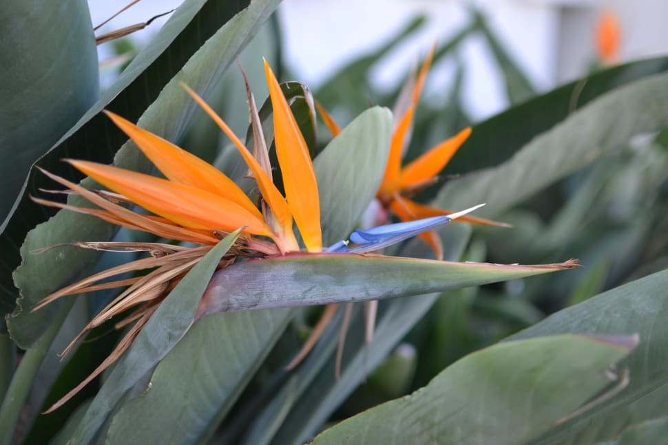 Best time for Bird of Paradise in Los Angeles