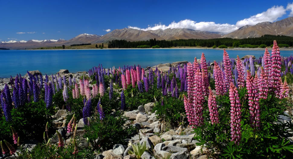 Spring in New Zealand - Best Time
