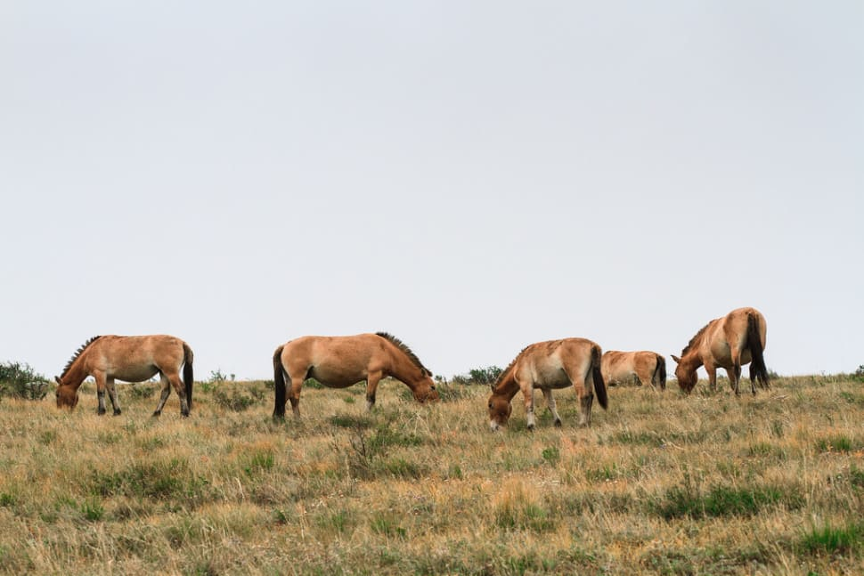 Wildlife Watching in Mongolia - Best Time