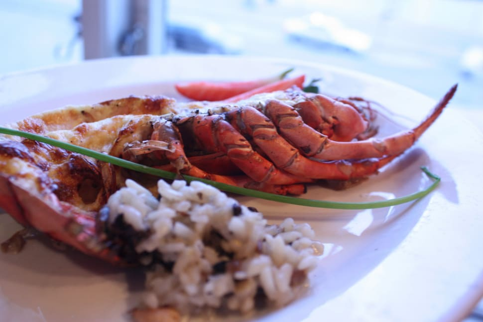 Norwegian Lobster in Norway - Best Season
