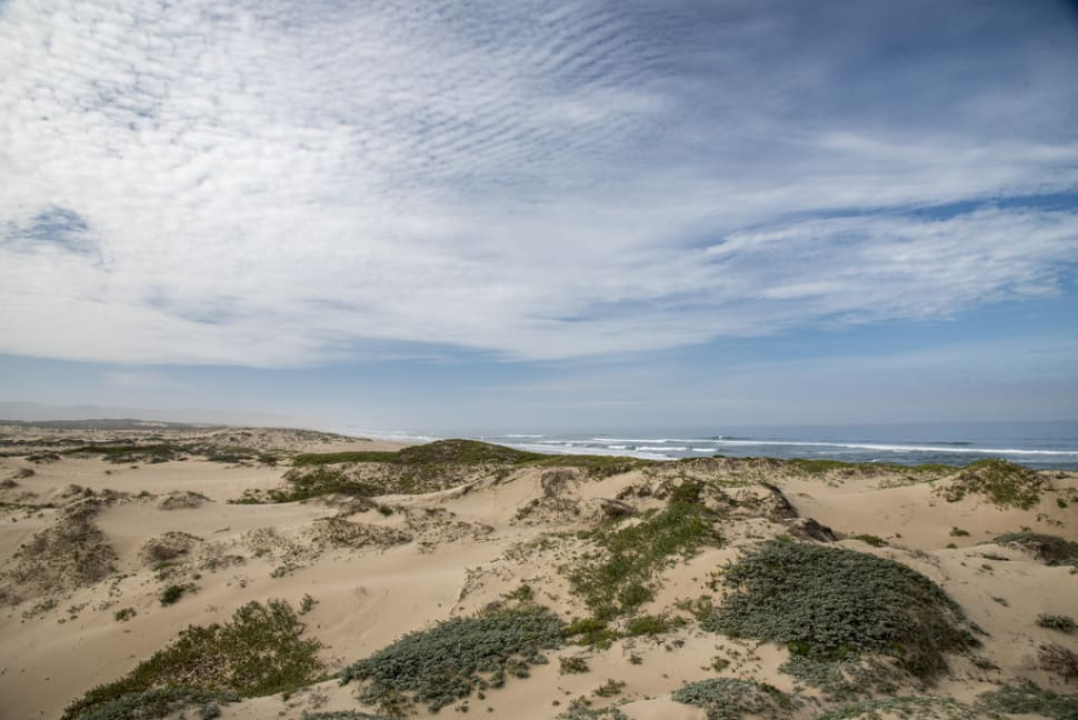 Best time to see Guadalupe-Nipomo Dunes in California