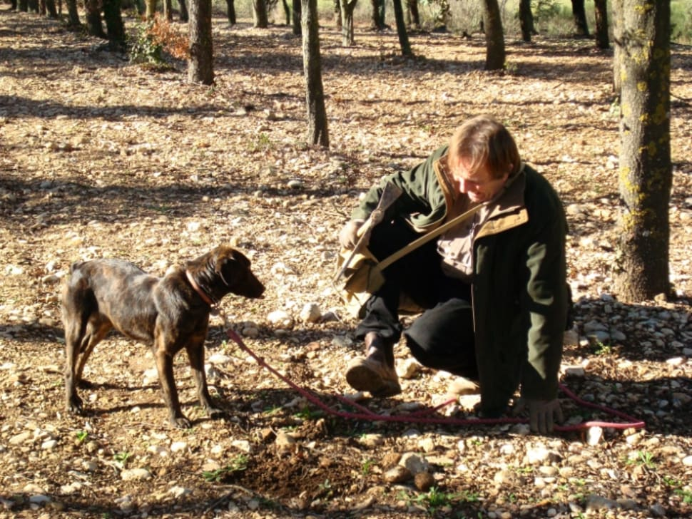 Best time for Black Truffle in Provence & French Riviera