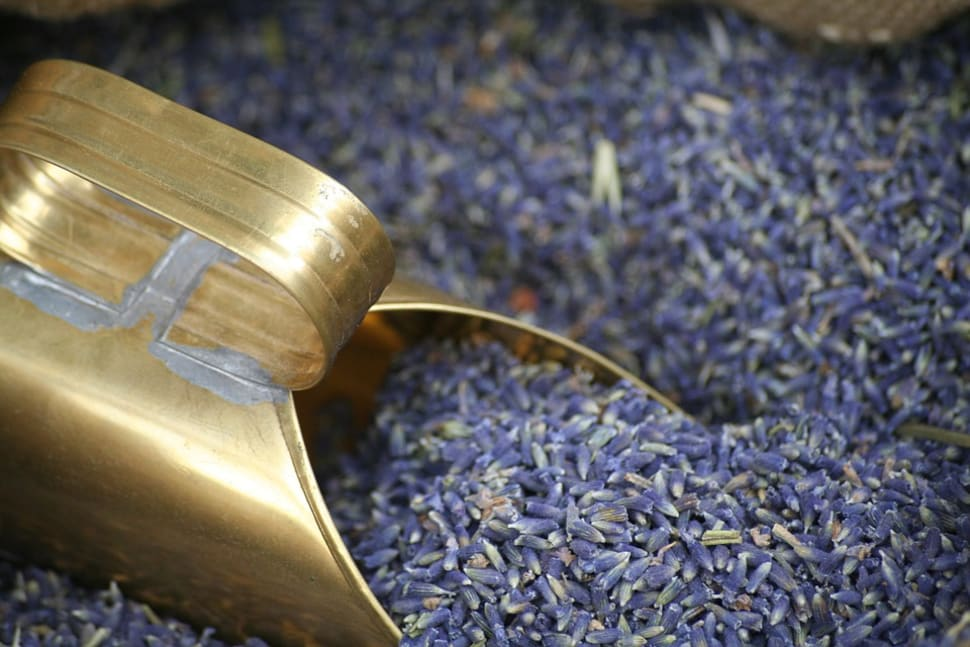 Best time for Lavender Fields in Bloom