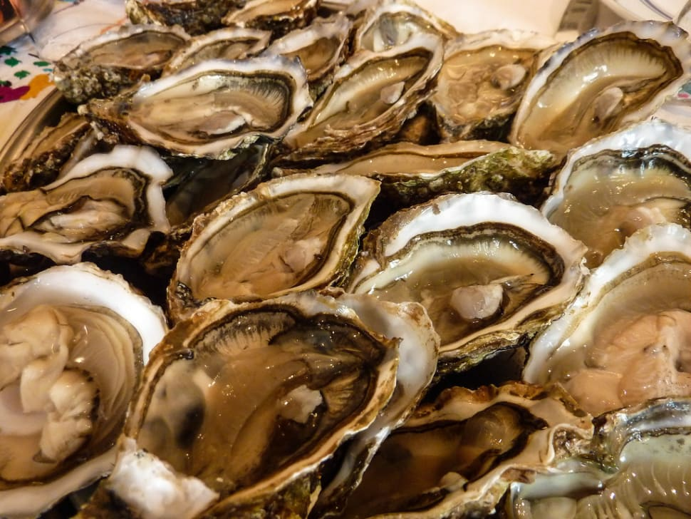 Oyster Safari in the Wadden Sea in Denmark - Best Season