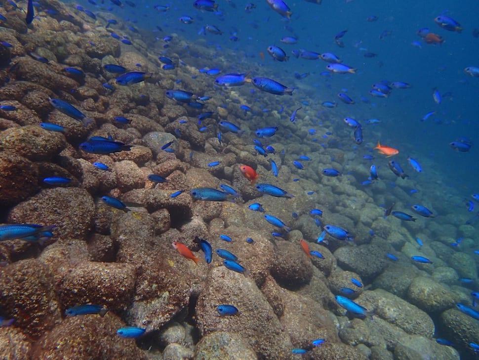 Diving in Faroe Islands - Best Season