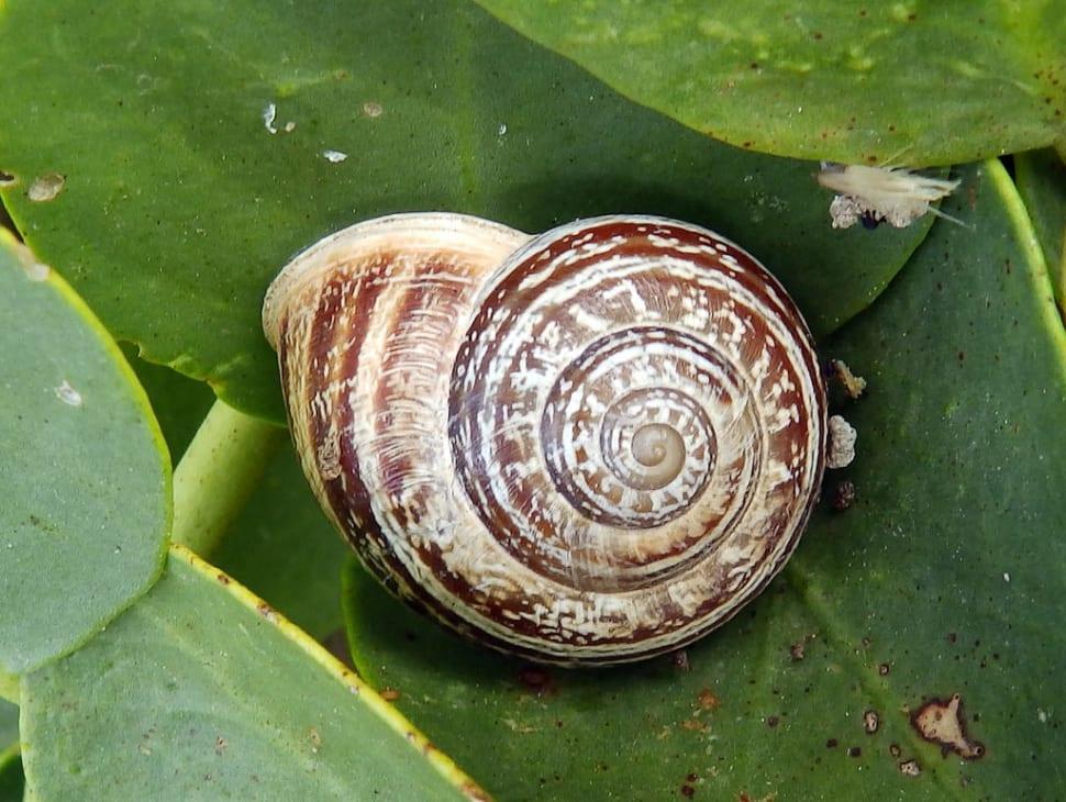 Snail Season in Malta - Best Time