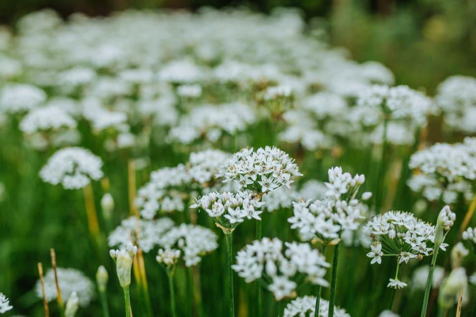 Wildflowers in Estonia - Best Time