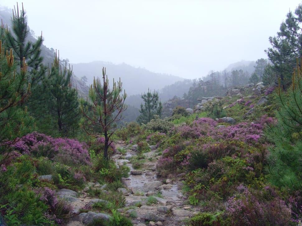 Best time for Peneda Geres National Park in Portugal
