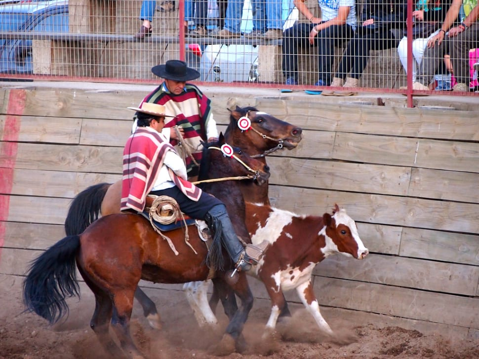 Rodeo in Chile - Best Time