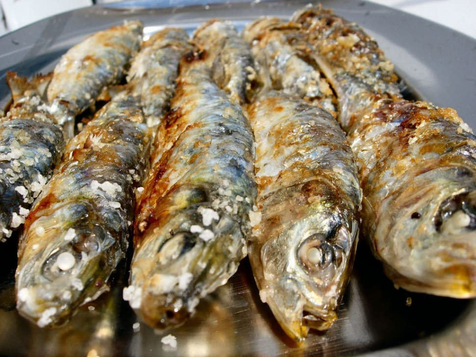 Sardines Season in Portugal - Best Season