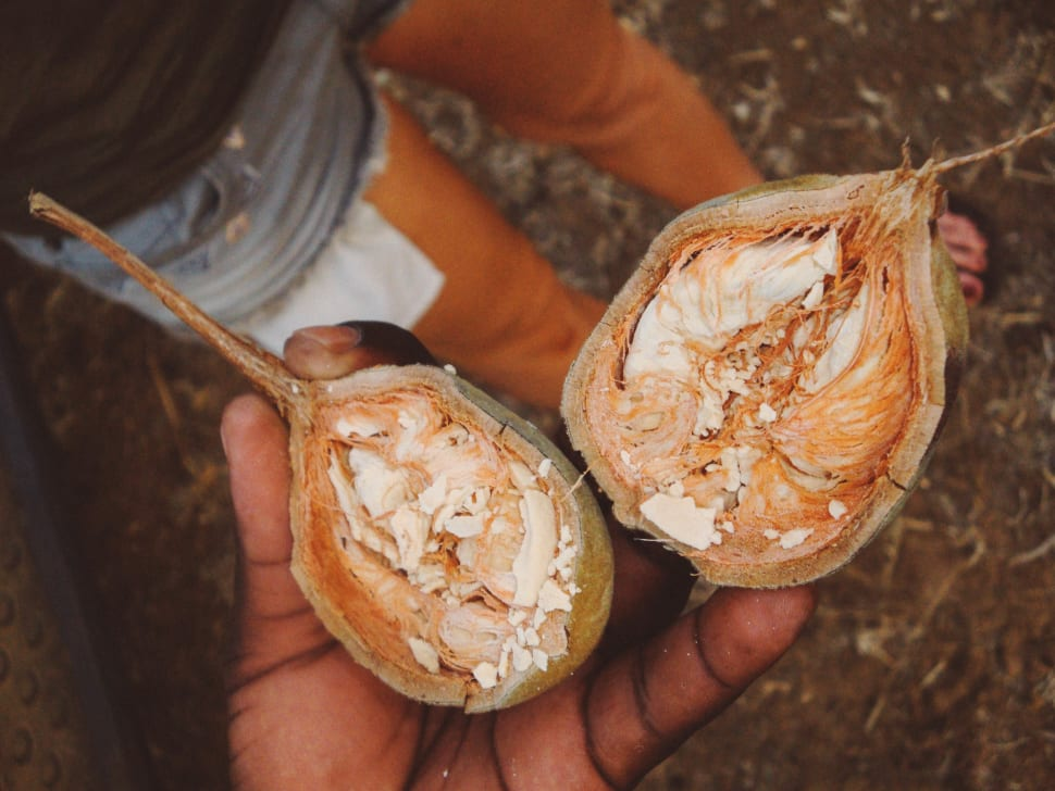 Baobab Fruit Season in Tanzania - Best Time
