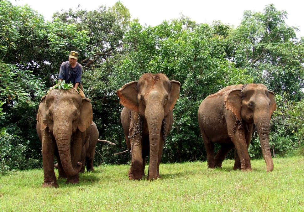 Wash an Elephant in Cambodia - Best Season