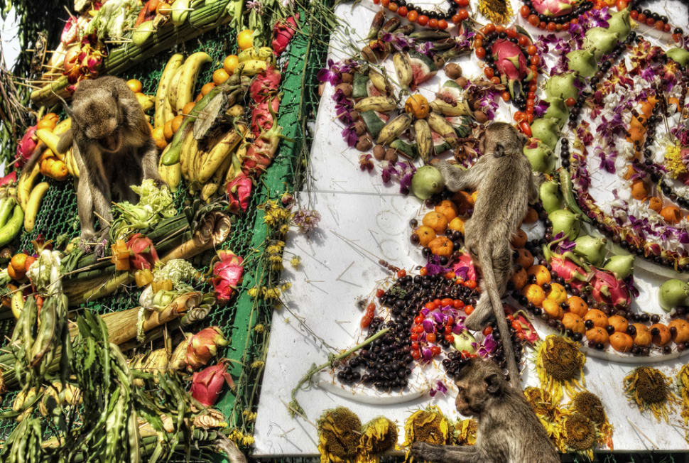 Lopburi Monkey Banquet Festival in Thailand - Best Season