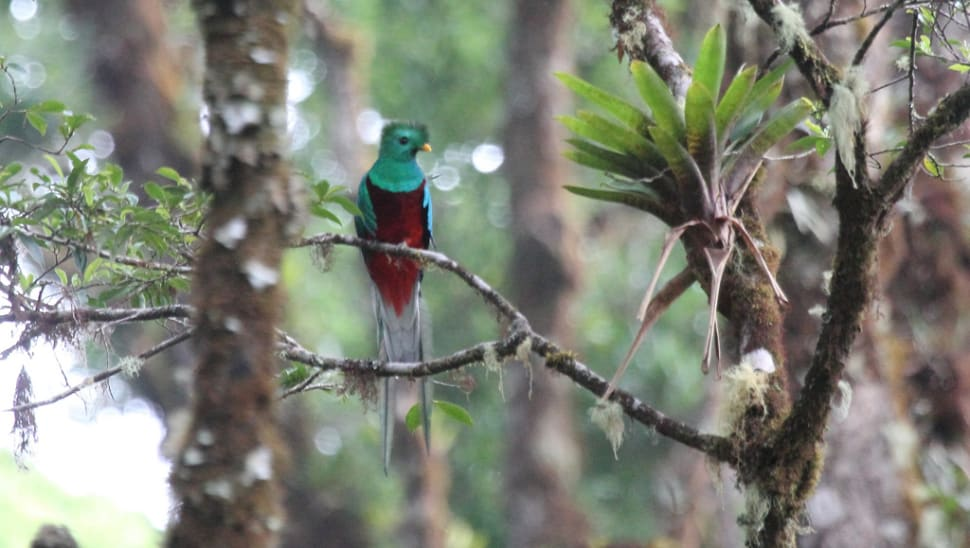 Best time to see Resplendent Quetzal in Costa Rica