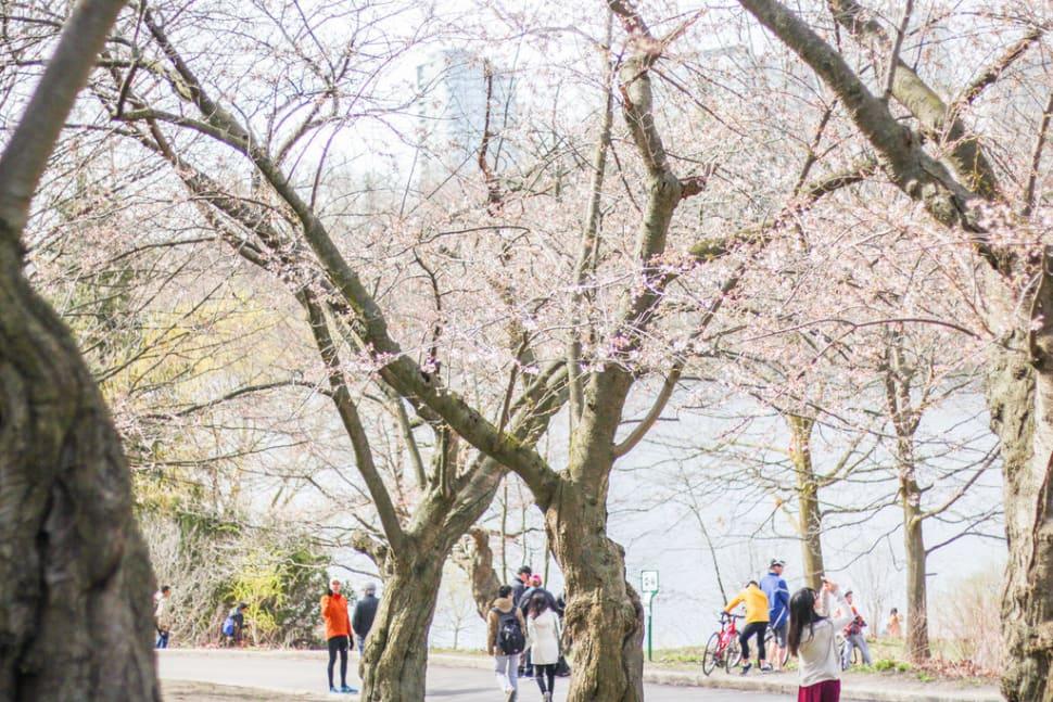 Spring in Toronto - Best Season