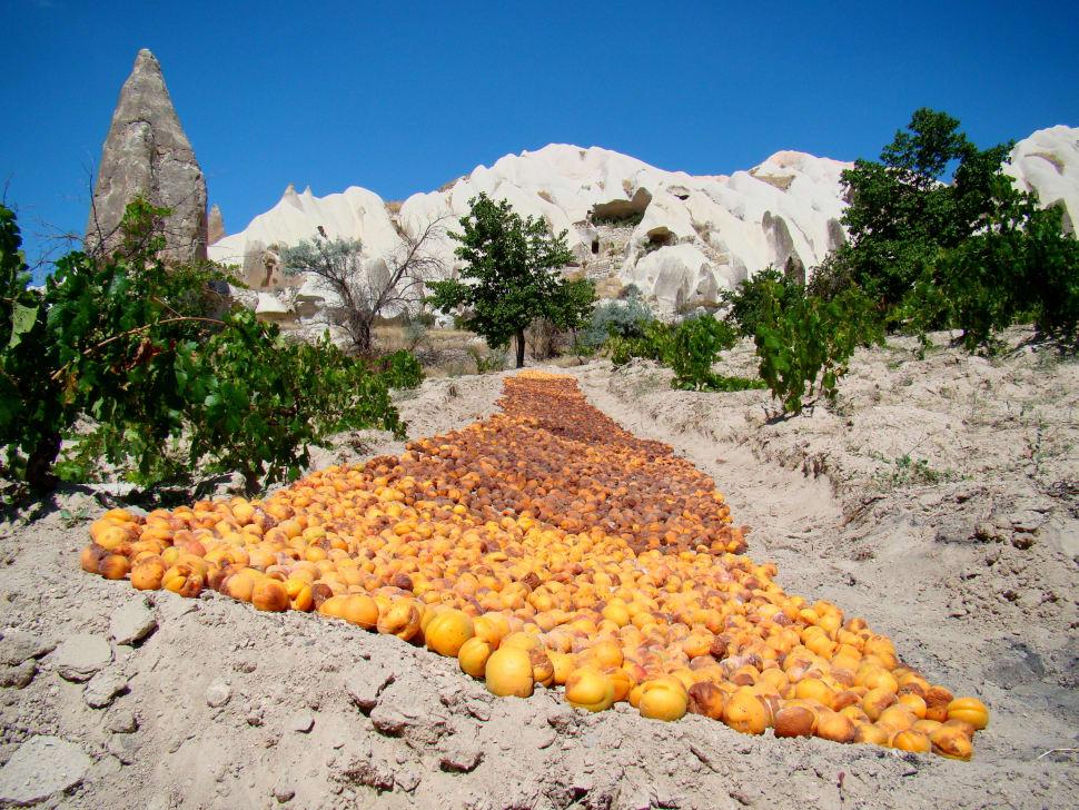 Dried Apricots in Cappadocia - Best Season