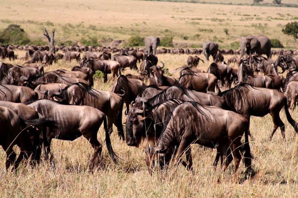 Best time for Safari Adventure in Kenya