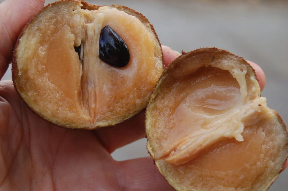 Best time for Sapodilla Season in Costa Rica