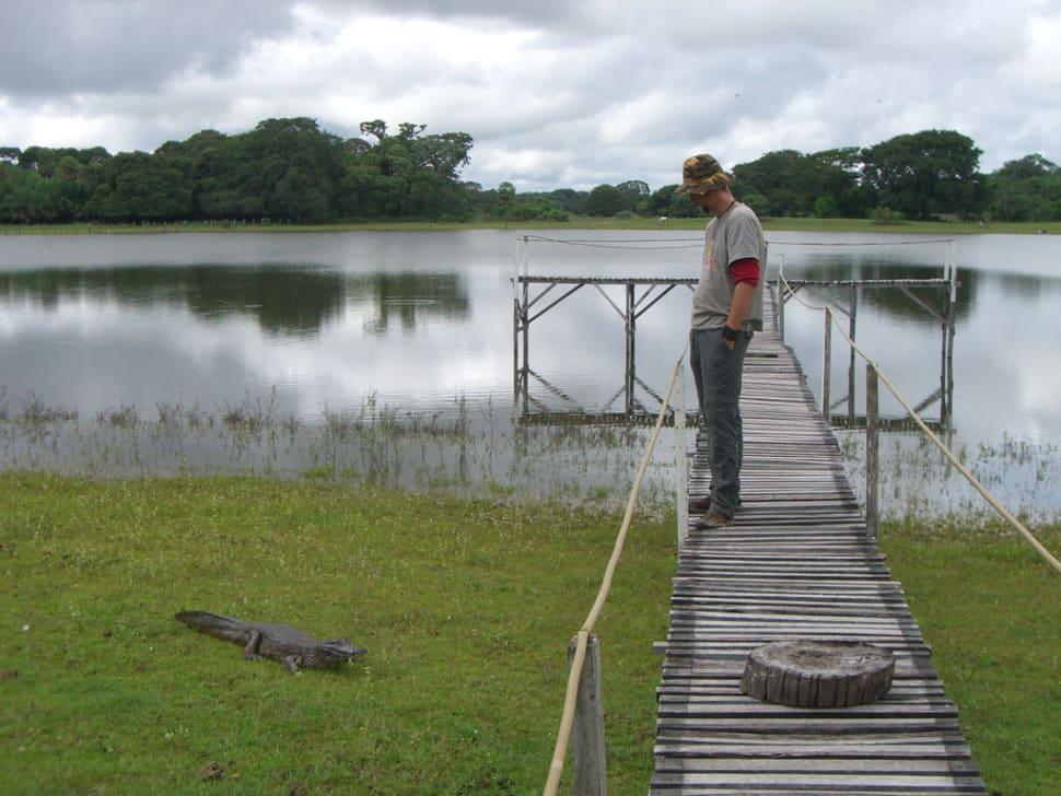 Alligator encounter in Pantanal