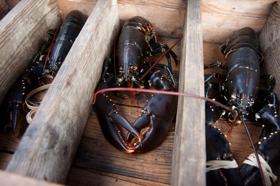 Lobster Season in Sweden - Best Time