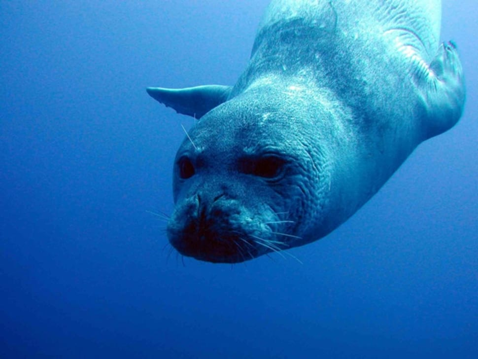Monk Seals in Madeira - Best Time