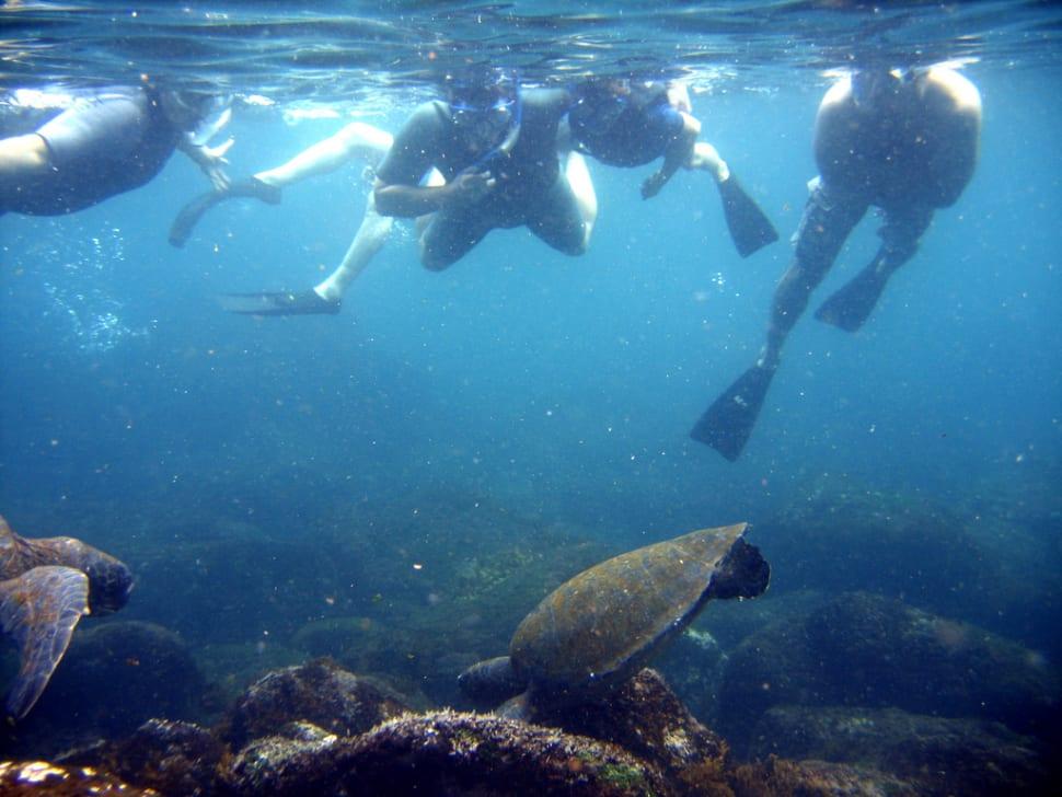 Best Diving Experience in Galapagos Islands - Best Season