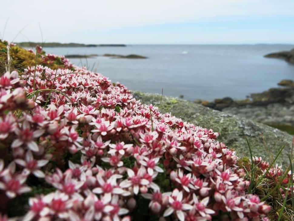 Wild Flowers in Norway - Best Season