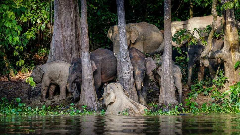 A whole family was coming for a refreshment to the Kinabatangan river.