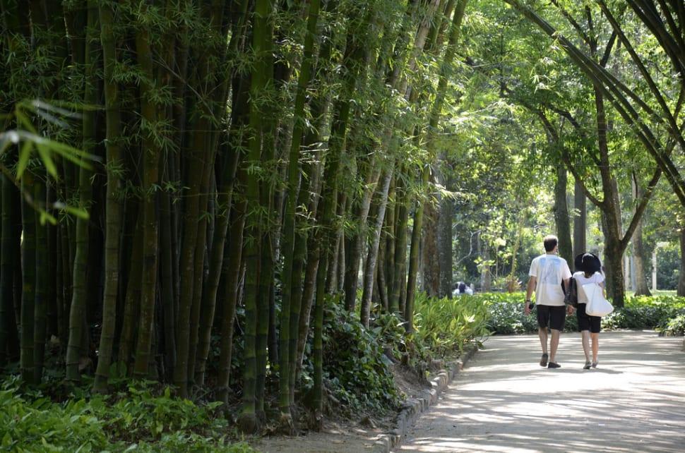 Best time for Botanical Garden or Jardim Botânico in Rio de Janeiro