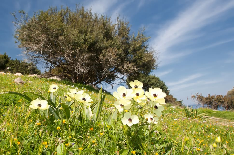 Best time to see Aphrodite Trail Abloom in Cyprus