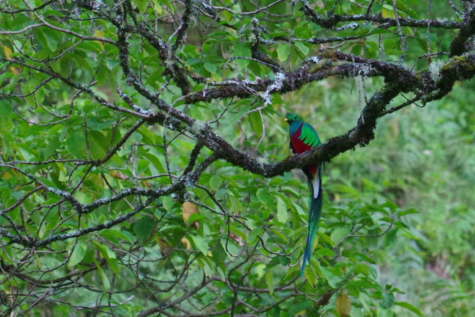 Best time for Resplendent Quetzal in Costa Rica