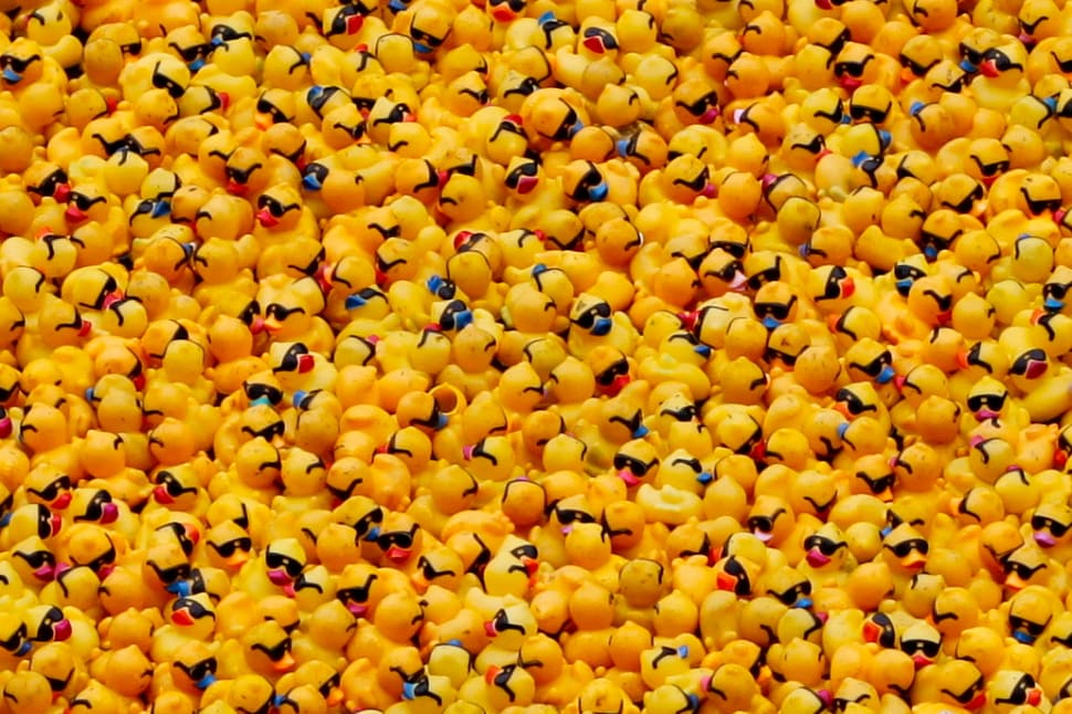 Rubber Ducky Race in Chicago - Best Time