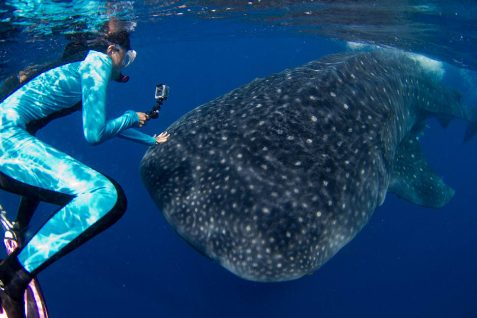 Swimming with Whale Sharks in Mexico - Best Season