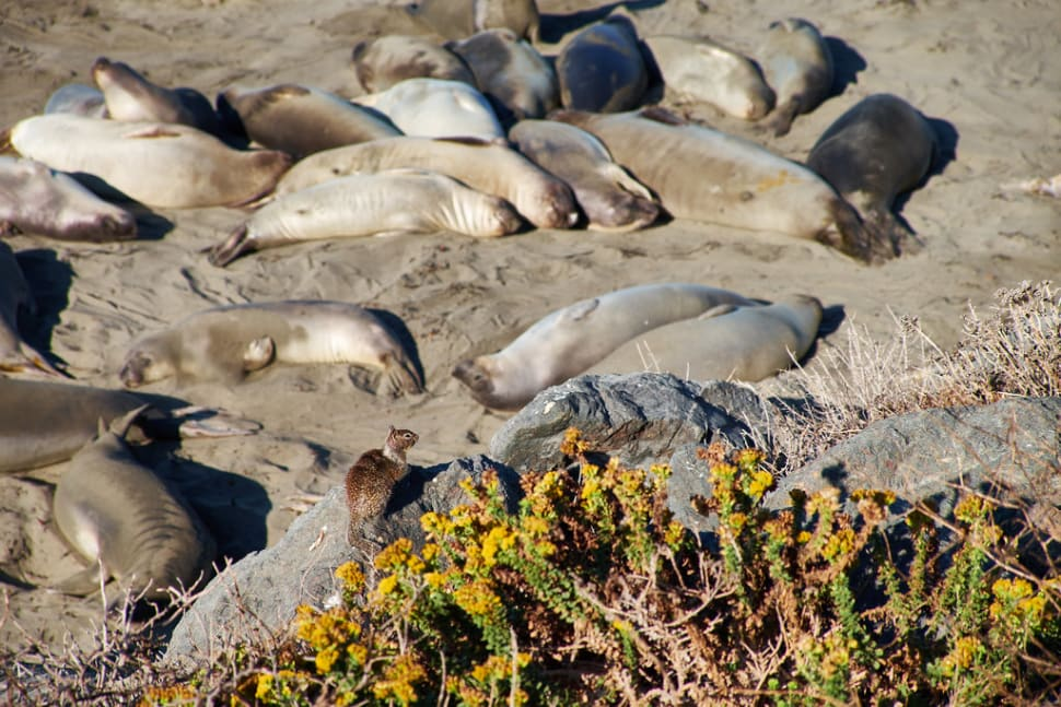 Best time to see Elephant Seal Watching in Los Angeles
