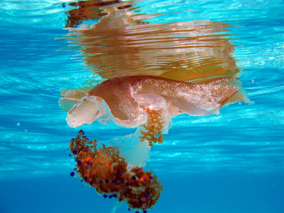 Jellyfish in Malta - Best Time