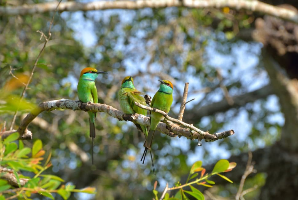 National Bird Watching Month in Sri Lanka - Best Time