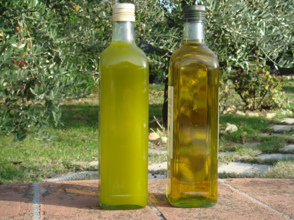 Best time for Olive Harvest