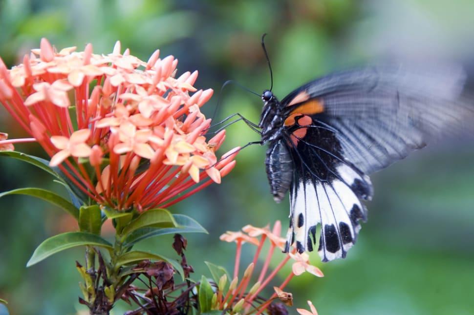 Butterflies in Laos - Best Time