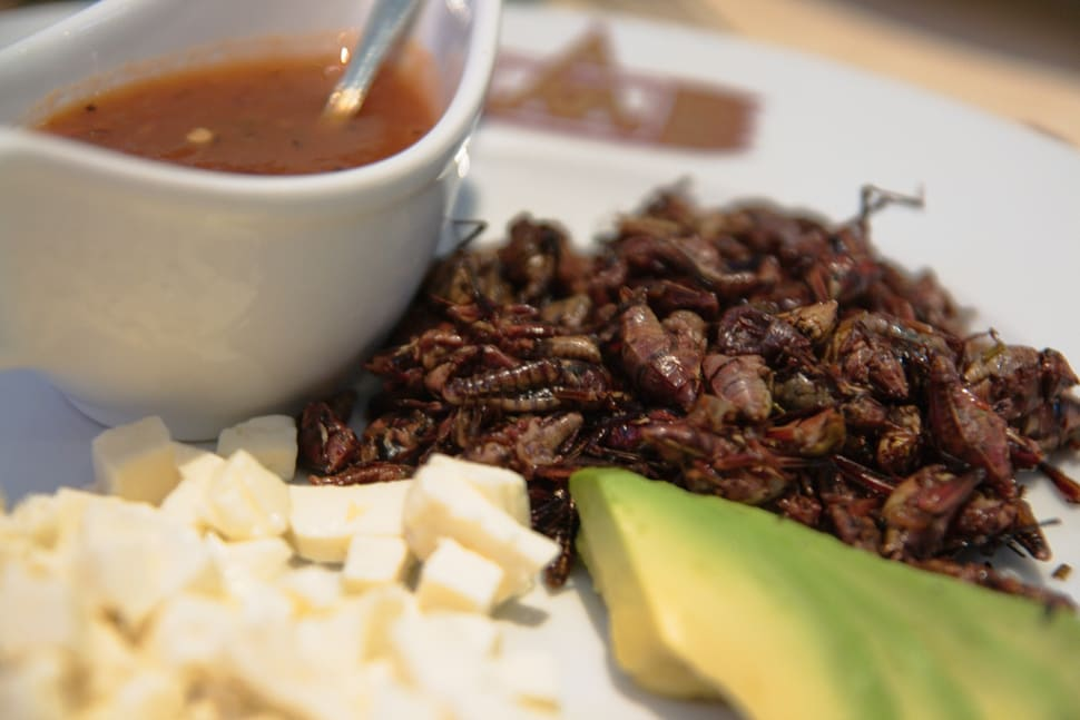 Best time for Chapulines or Grasshoppers in Mexico