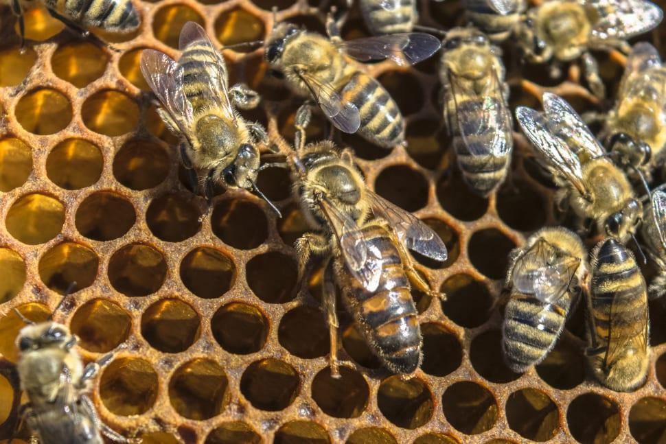 Best time for Honey Season