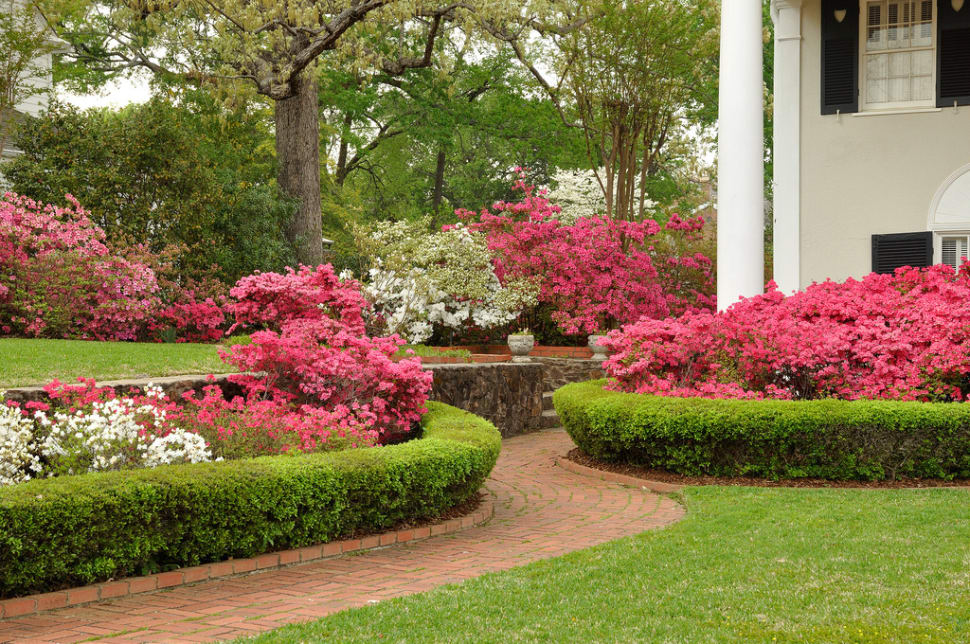 Azalea Bloom in Tyler in Texas - Best Season