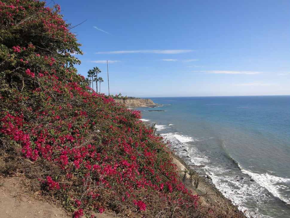Best time to see Bougainvillea Bloom in Los Angeles