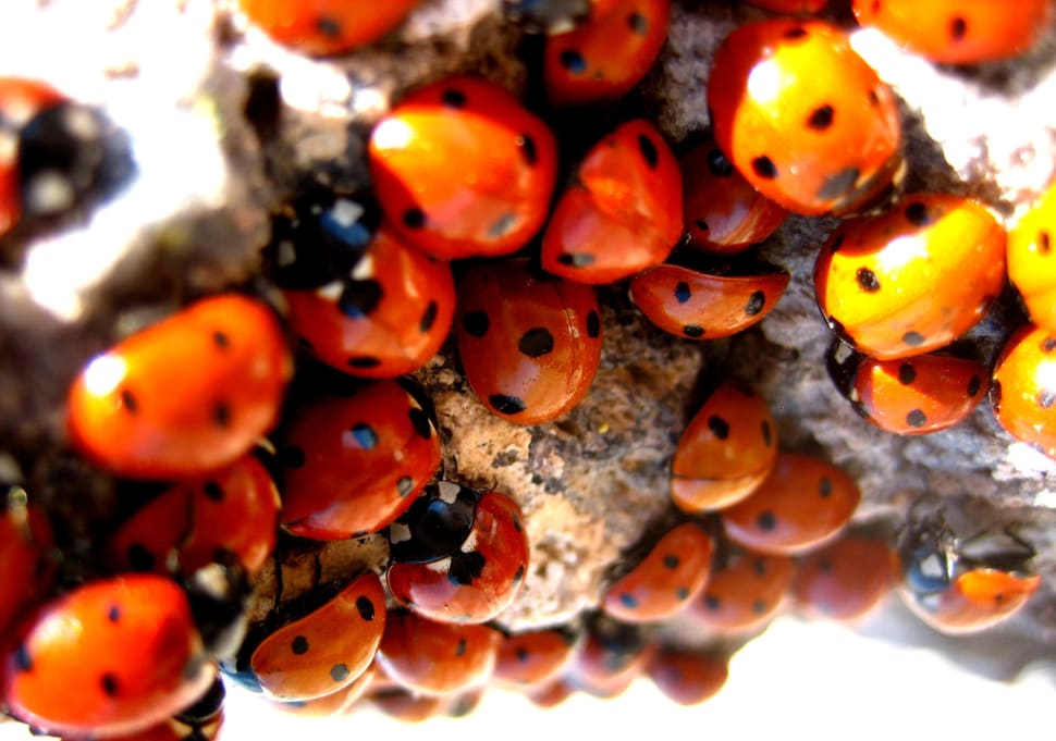 Things to do in California : Ladybugs
