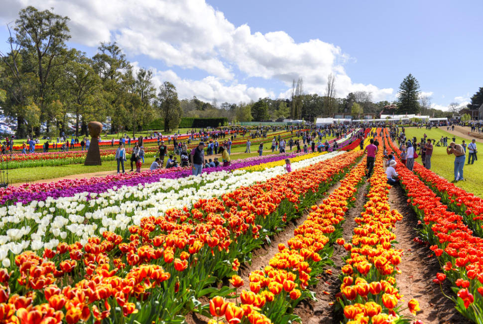 Tesselaar Tulip Festival in Melbourne - Best Time
